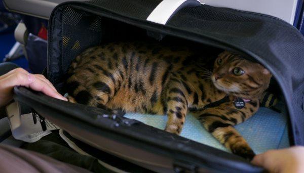 Перевозка домашних животных в поезде